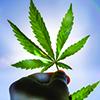 BL64_shutterstock_cannabis