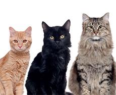 BL72_TP_cats